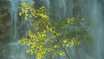 birch tree and waterfall