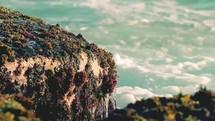 algae on sea rocks