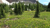 meadow of wildflowers