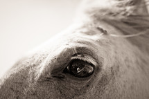 Closeup of horses eye