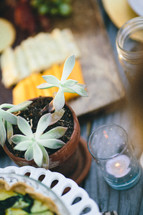 succulent plant and candle