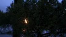 light behind tree branches