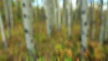 running through a forest