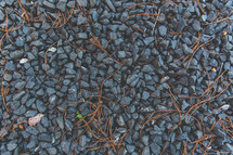 dried vegetation in gravel