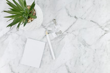 houseplant, clips, and paper on marble countertop
