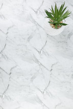 houseplant on marble countertop