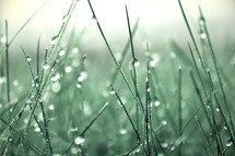 dew drops on grass