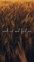 Seek me and find me