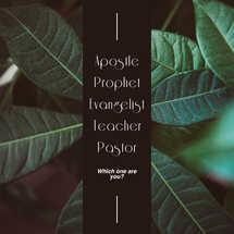 Apostle Prophet Evangelist Teacher Pastor
