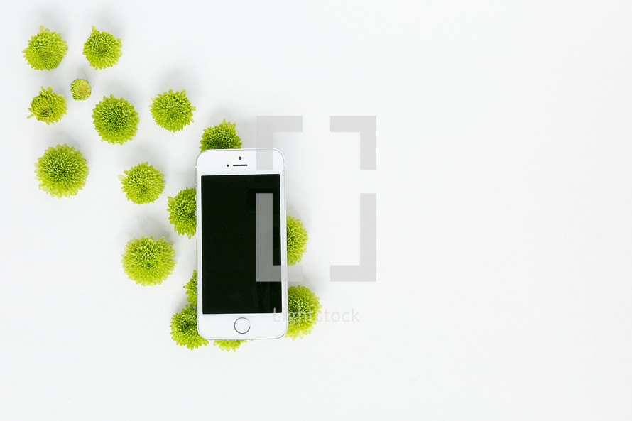 green mums and white cellphone on a white background
