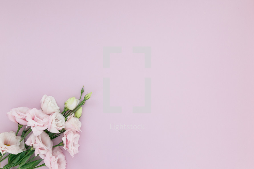 Pink flowers on a pink background.