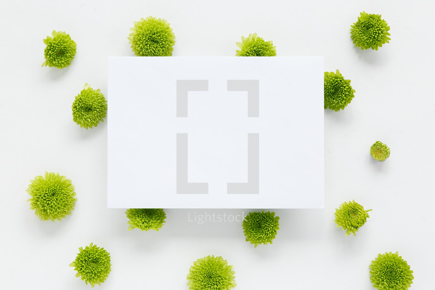 blank white paper on green mums