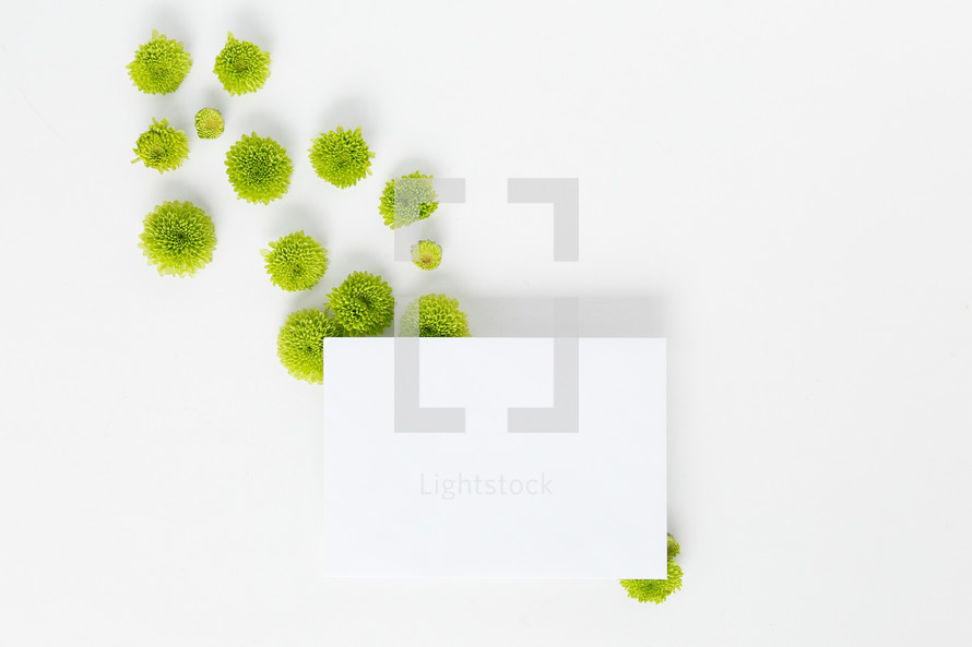 green mums and tablet on a white background