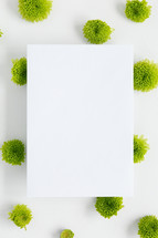 green mums and blank paper white background