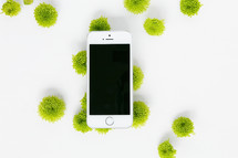 green mums and cellphone on a white background