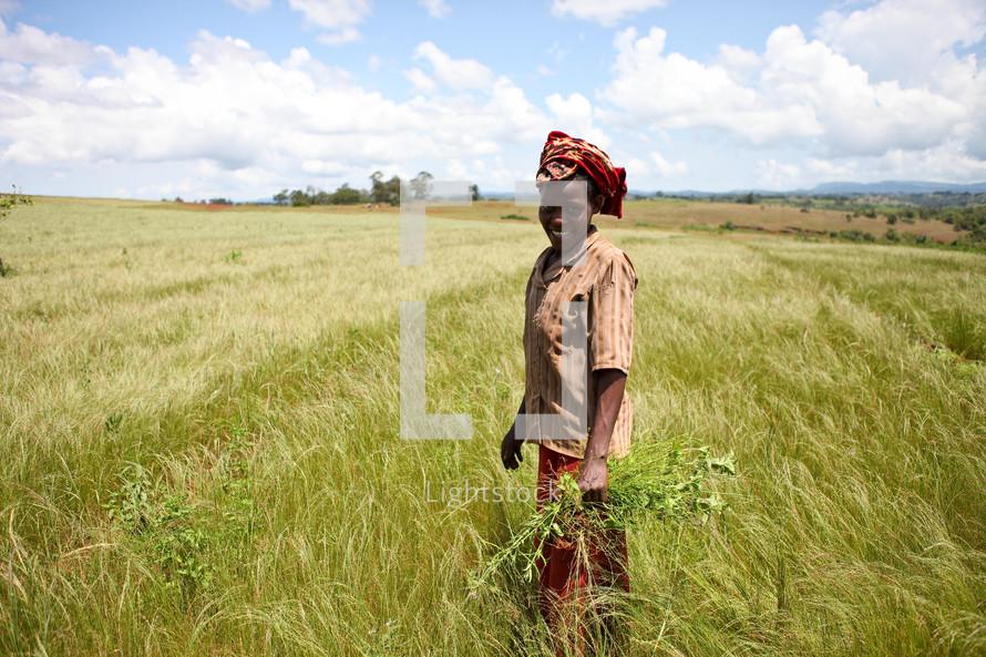 woman harvesting in Ethiopia