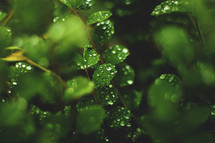 wet leaves in spring