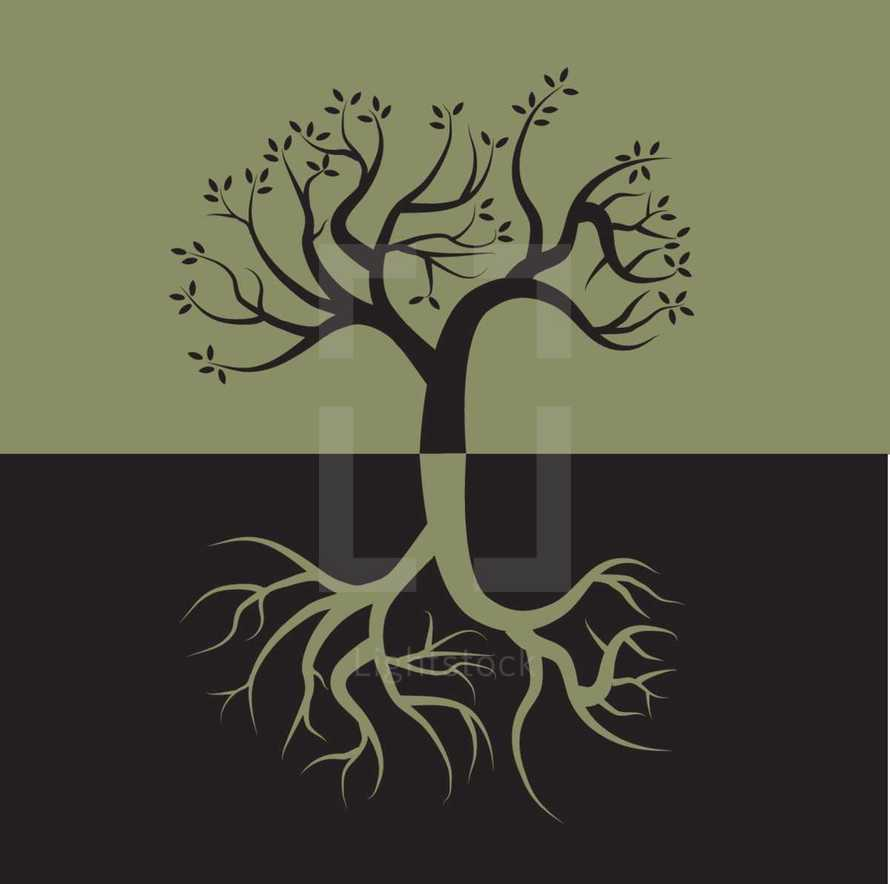 roots on a tree