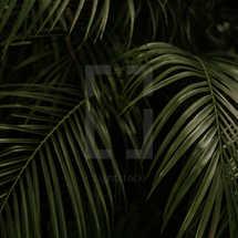 Summer Launch (Palm)