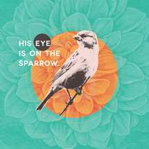 His eye is on the sparrow.