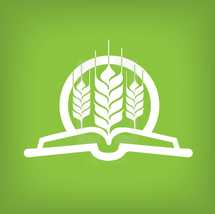 open Bible and wheat grains