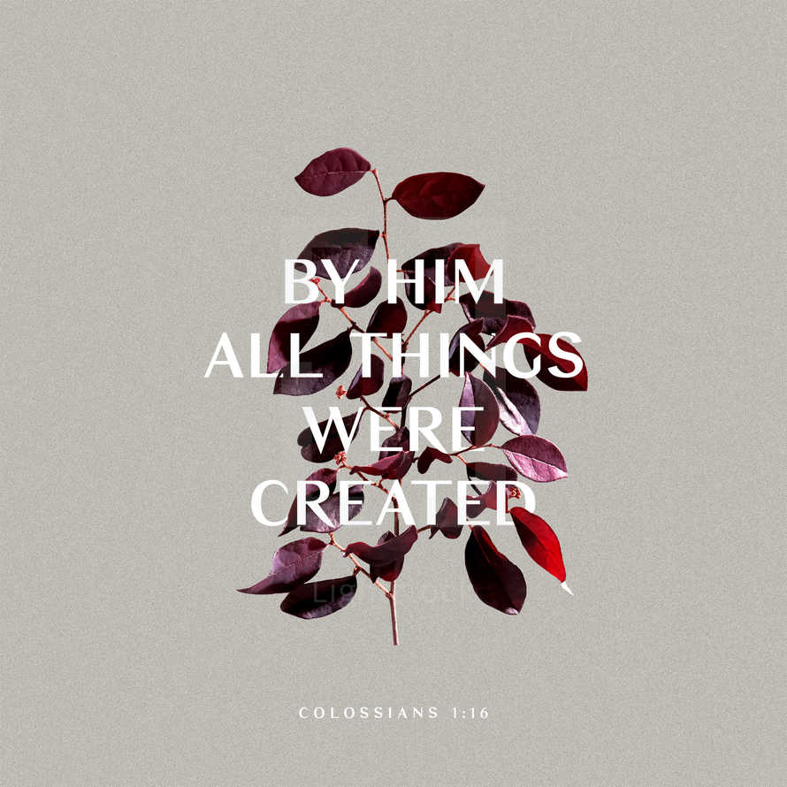 By Him all things were created. – Colossians 1:16