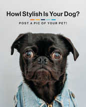 Howl stylist is your dog? Post a pic of your pet!