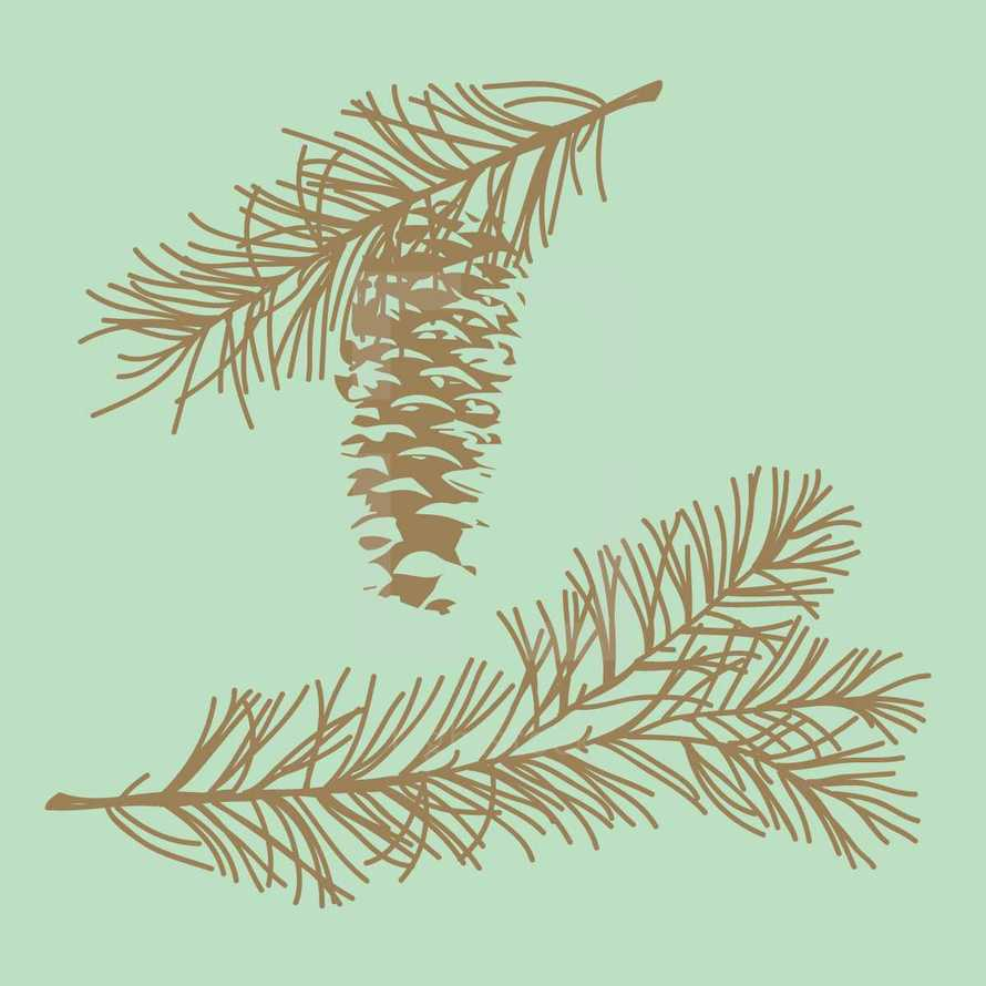 pine cone and pine needles