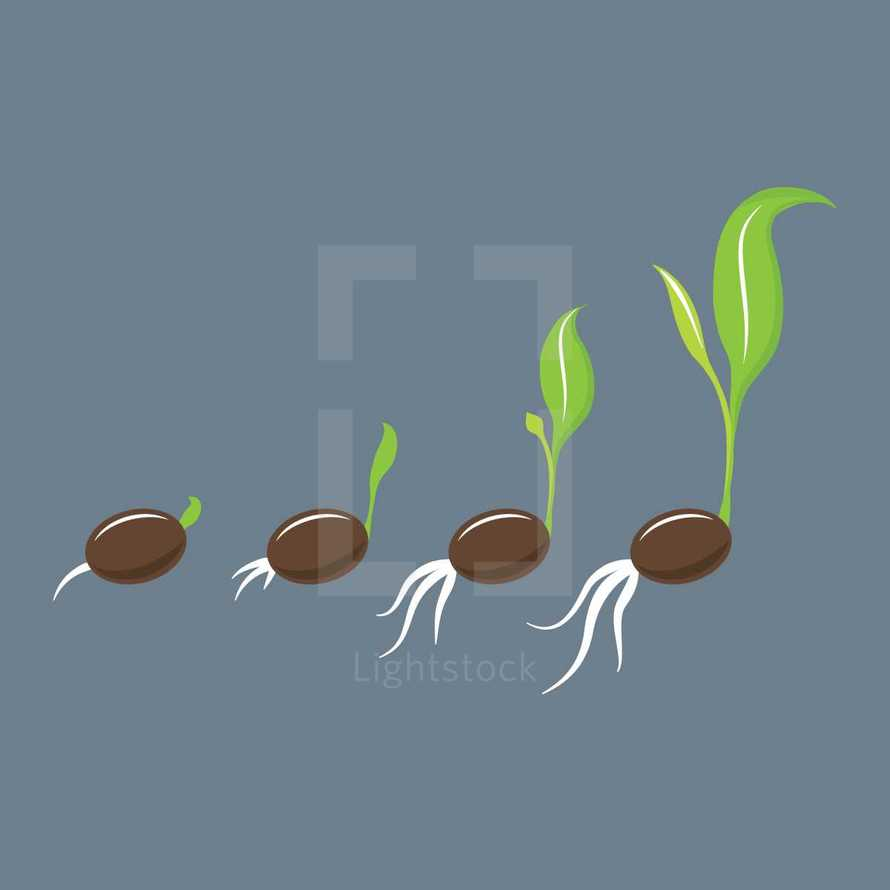 A sprouting seed